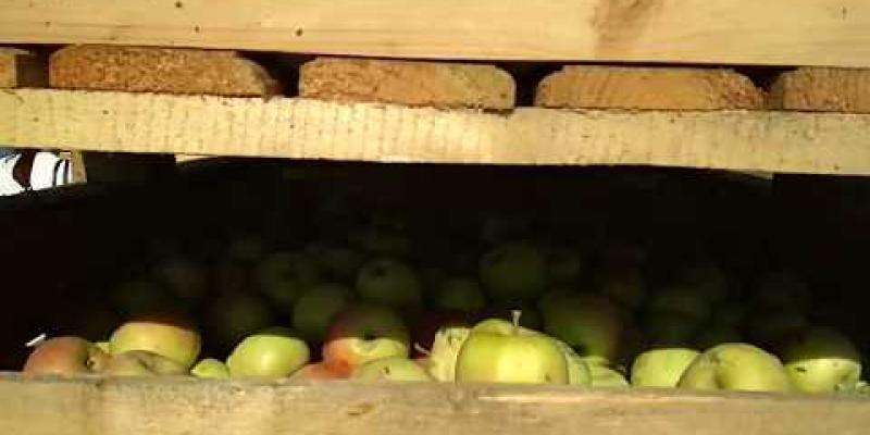 Вбудована мініатюра для Фасування яблук на Чигиринщині
